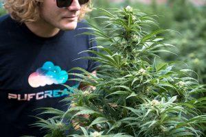 pot zero organic colorado cannabis farm